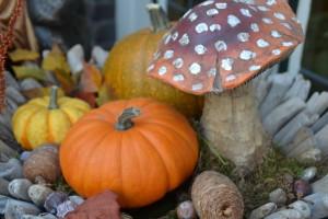 pumpkin-967050_1920